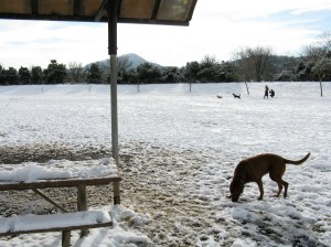 This was a snowy winter day at the Amazon Dog Park - but lot's of fun!